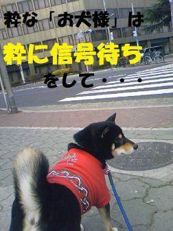 DCF_0022_20090107005357.jpg
