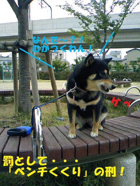 DCF_0022_20090625041602.jpg