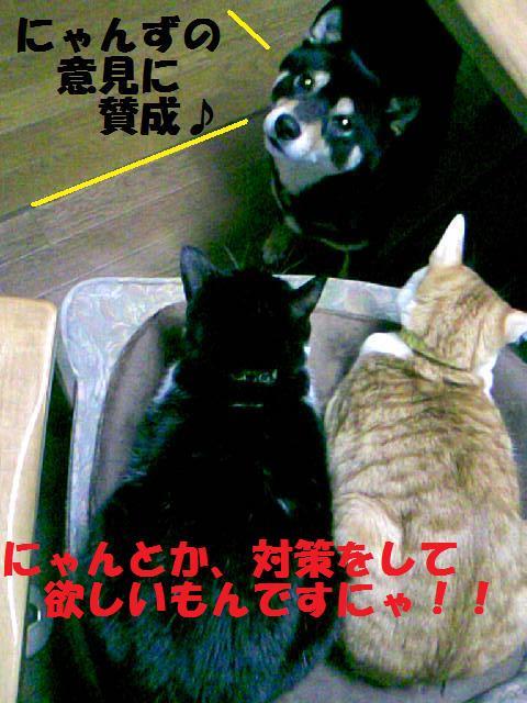 DCF_0024_20090125154905.jpg