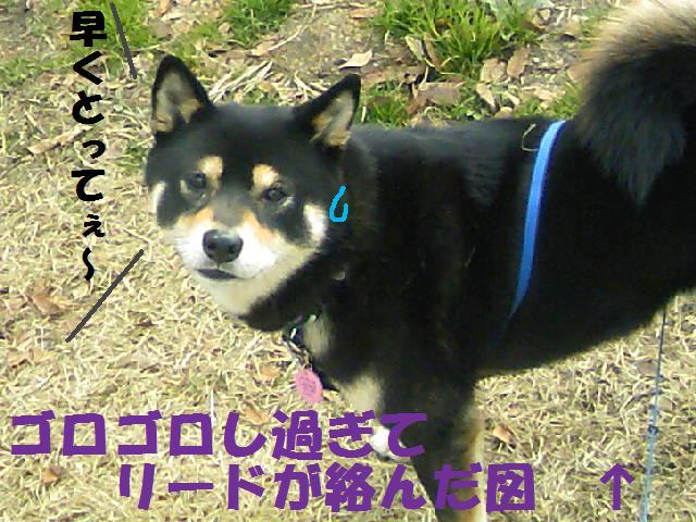 DCF_0025_20090124190121.jpg