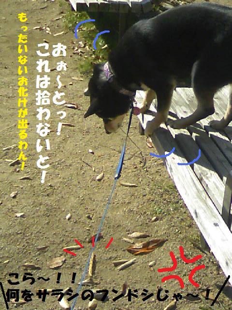 DCF_0025_20091208011147.jpg