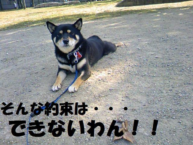 DCF_0026_20081115021606.jpg