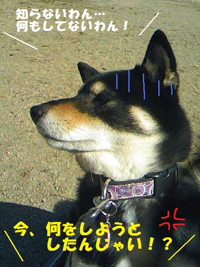 DCF_0026_20091208011140.jpg