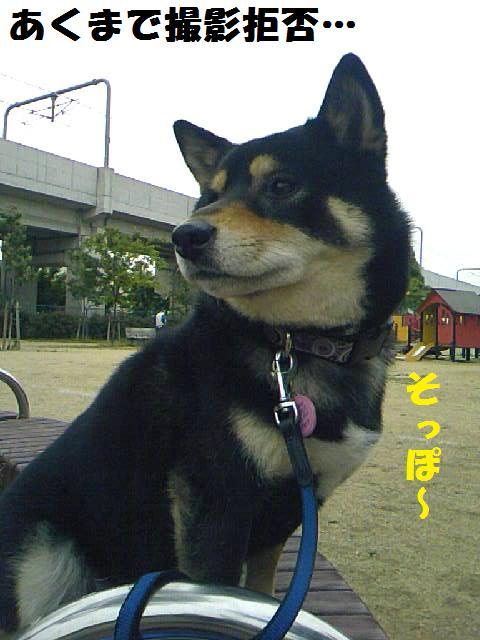 DCF_0029_20090625043144.jpg