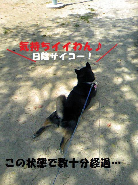 DCF_0032_20090414020248.jpg