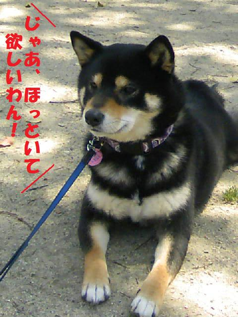 DCF_0033_20090414023232.jpg