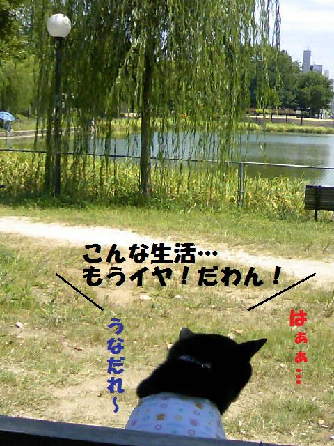 DCF_0033_20090727231707.jpg