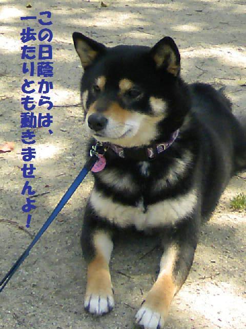 DCF_0033_20090902155031.jpg