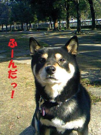 DCF_0036_convert_20081222155916.jpg