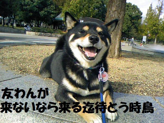 DCF_0037_20081101013206.jpg