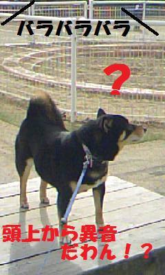 DCF_0037_20090124191330.jpg