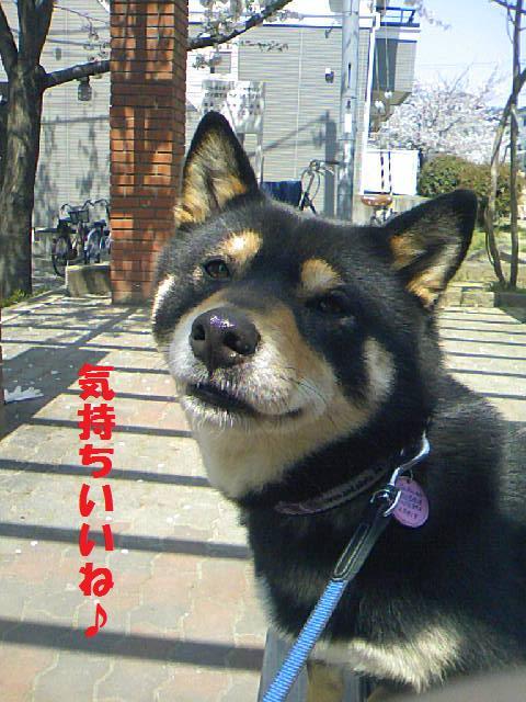 DCF_0039_20090412015257.jpg