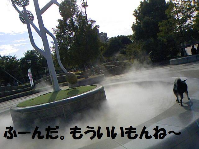 DCF_0040_20081101015817.jpg