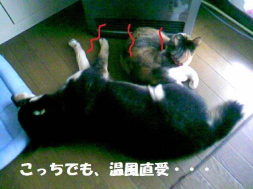 DCF_0040_20090125153913.jpg