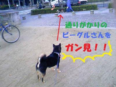 DCF_0042_convert_20081220230935.jpg