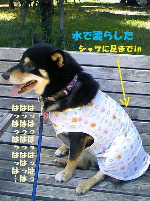 DCF_0046_20090727231714.jpg
