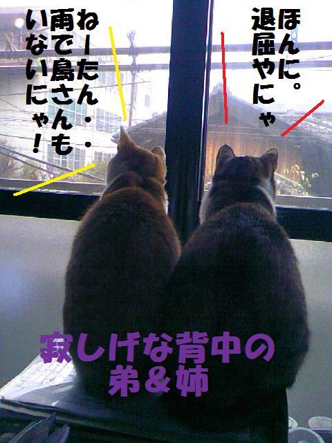 DCF_0047_20090130173103.jpg
