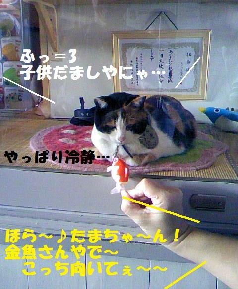 DCF_0047_20091023143050.jpg
