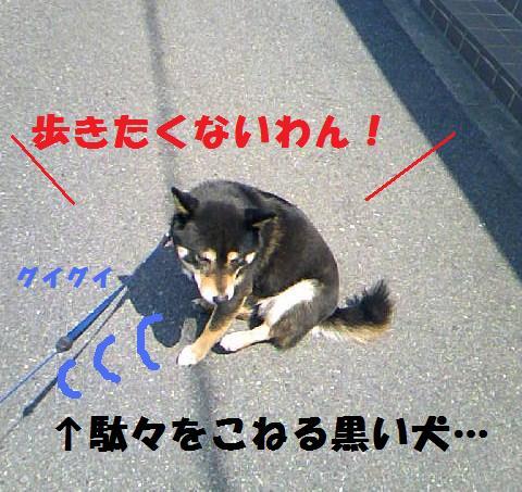 DCF_0049_20090414020307.jpg