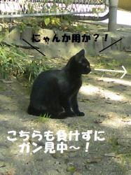 DCF_0049_20091208004754.jpg