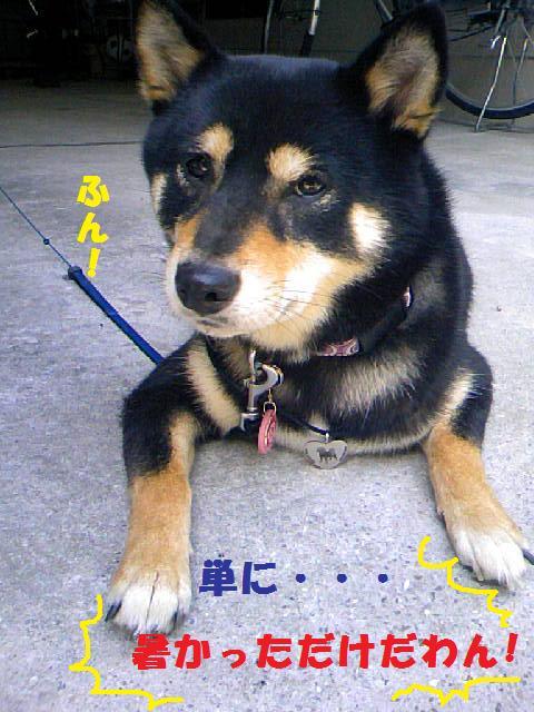 DCF_0050_20090724024846.jpg