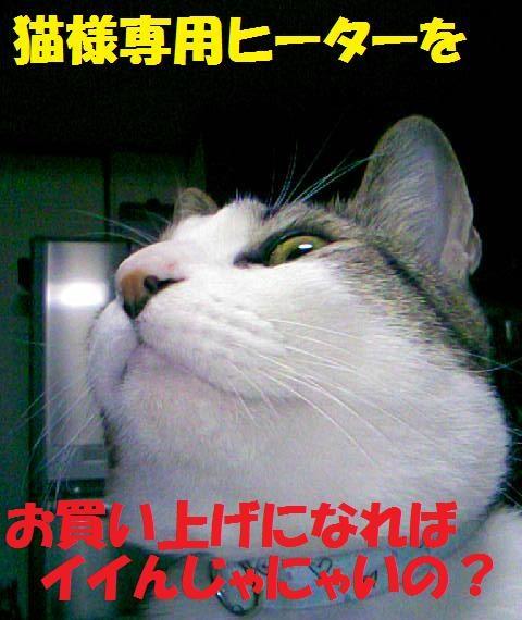 DCF_0051_20081201024522.jpg