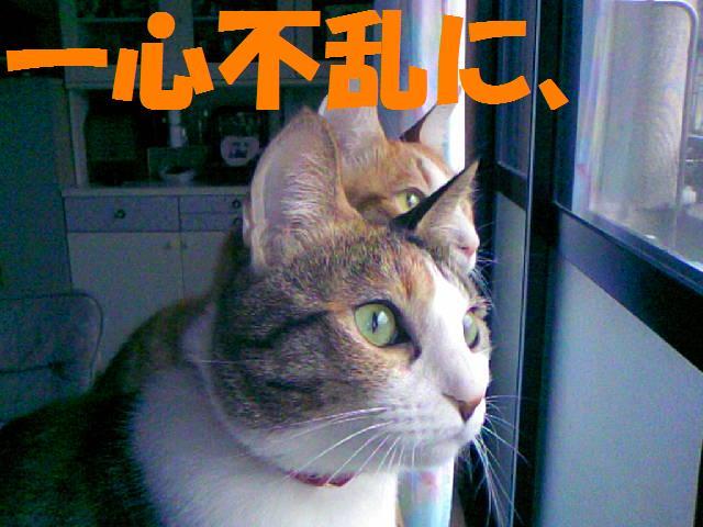 DCF_0051_20090130173207.jpg