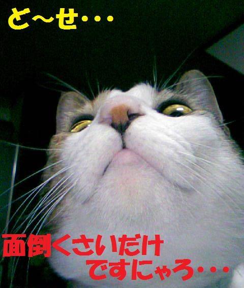 DCF_0052_20081201023537.jpg
