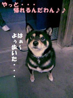DCF_0052_20090205002524.jpg