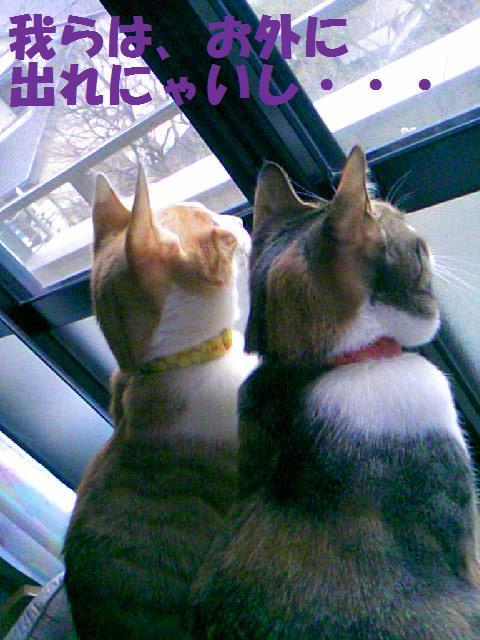 DCF_0053_20090130173127.jpg