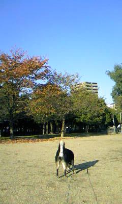 DCF_0054_20081115014254.jpg