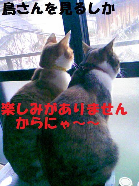 DCF_0054_20090130173231.jpg