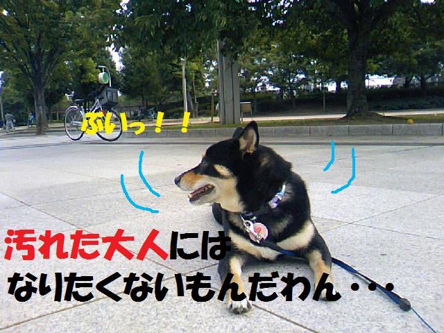 DCF_0056_20081021020522.jpg