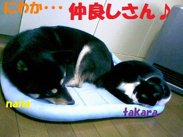 DCF_0057_20081206042708.jpg