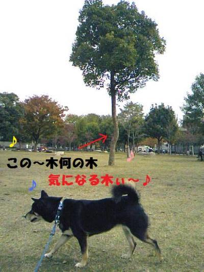 DCF_0061_convert_20081220225141.jpg
