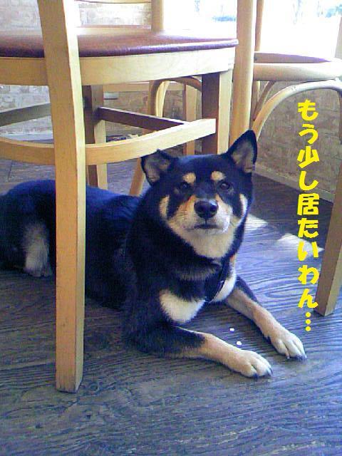 DCF_0062_20090921015237.jpg