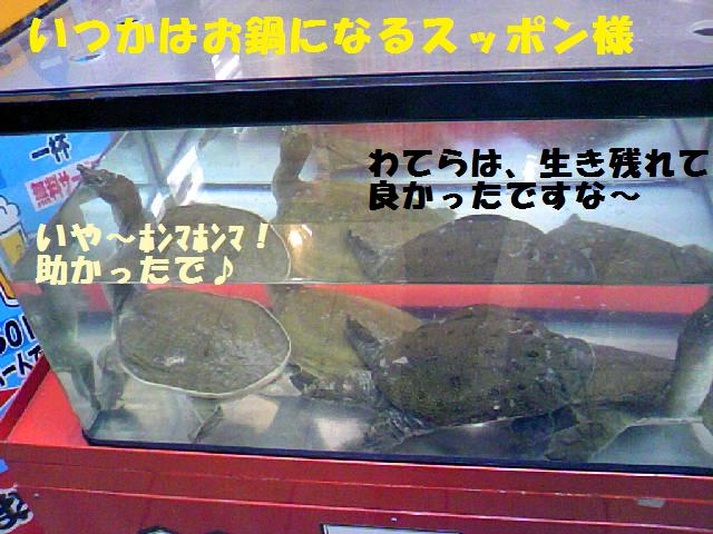 DCF_0063_20090528085028.jpg
