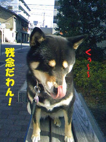DCF_0064_20091216014020.jpg