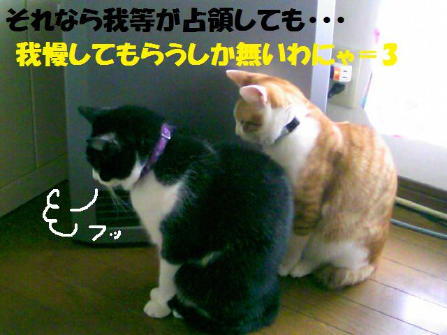 DCF_0066_20081201025012.jpg