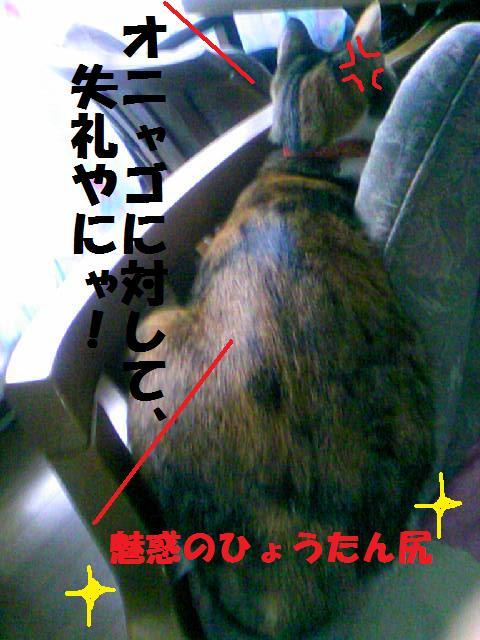 DCF_0069_20090107003041.jpg