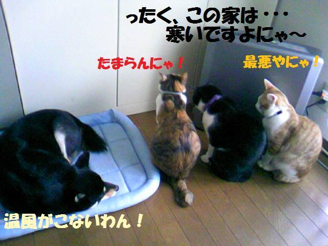 DCF_0071_20081201023038.jpg