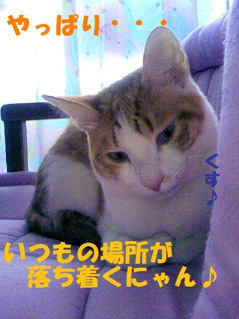 DCF_0073_20090125161331.jpg