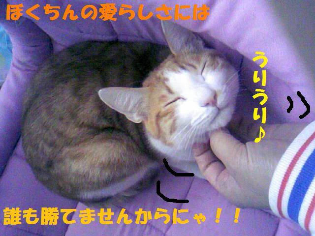 DCF_0075_20090114000900.jpg