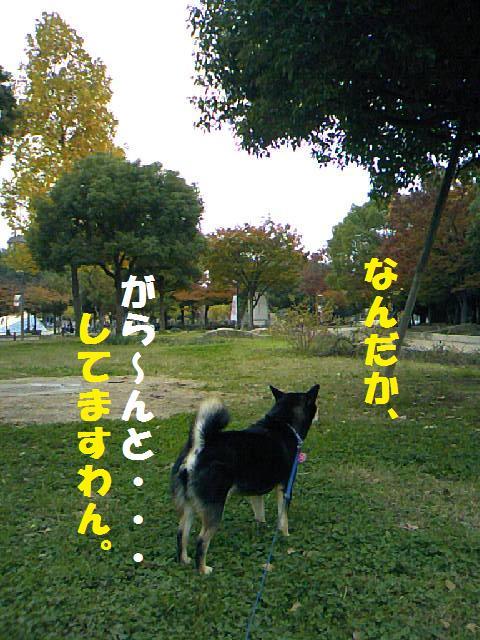 DCF_0077.jpg