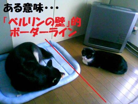 DCF_0078_20081206040606.jpg