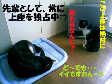DCF_0079_20081206035426.jpg