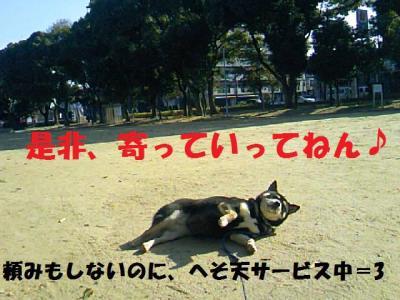 DCF_0094_convert_20081224033706.jpg