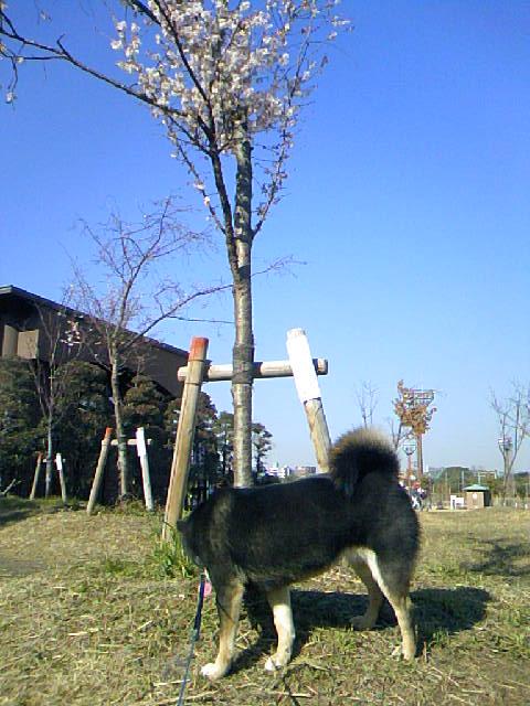 DCF_0096_20081224042859.jpg