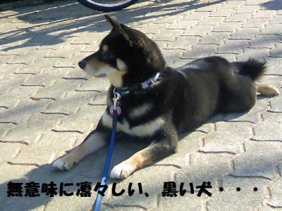 DCF_0135_convert_20081224044251.jpg