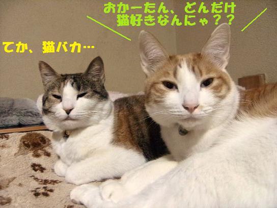 DSCF0950_20100116194103.jpg